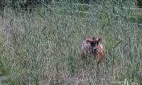 Große Weide - kleine Kuh!