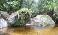 Regenwald Wasserloch