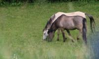 Weide mit Pferden