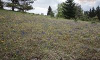 Frühling auf der Wacholderheide