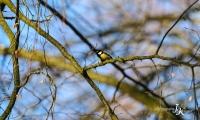 Frühlingsrufer