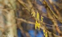 Pollenschleuder