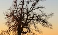 Sonnenaufgang-6