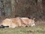 Vorfrühlingstag bei der Herde