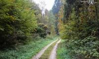 Goldener Oktober Wanderritt Tag 2 - 03