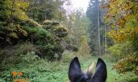 Goldener Oktober Wanderritt Tag 2-04