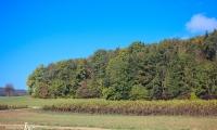 Goldener Oktober Wanderritt Tag 3- 12