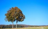 Goldener Oktober Wanderritt Tag 3 - 13