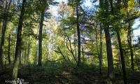 Goldener Oktober Wanderritt Tag 3 - 19