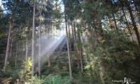 Goldener Oktober Wanderritt Tag 3 - 34