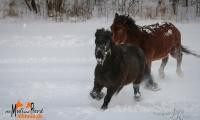 Galopp durch den Schnee