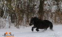 Tigra voll Speed
