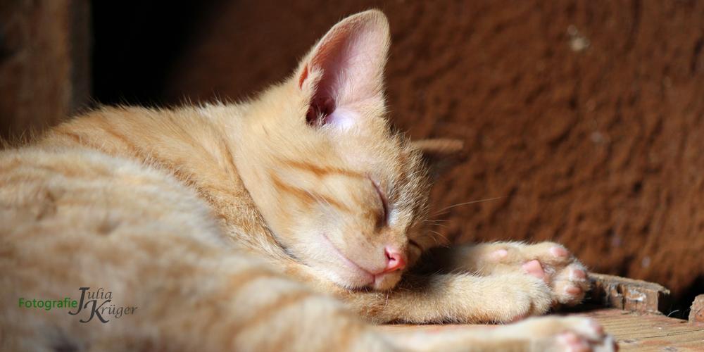 Vollkommen entspannt sind die Katzen im Schlaf